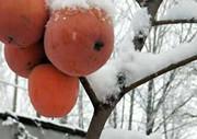 我市普降瑞雪 平均降雪量3.2毫米